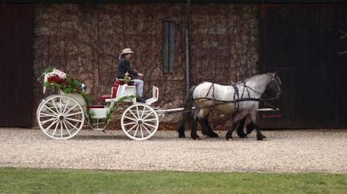 Kutschfahrten Und Pferdeausbildung Thuringen Ringo Liebau