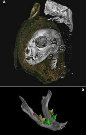 A 3D-scan of a mummifield cat head (top) and the cat's jaw (bottom).  By Richard Johnston (SWANSEA UNIVERSITY/AFP)
