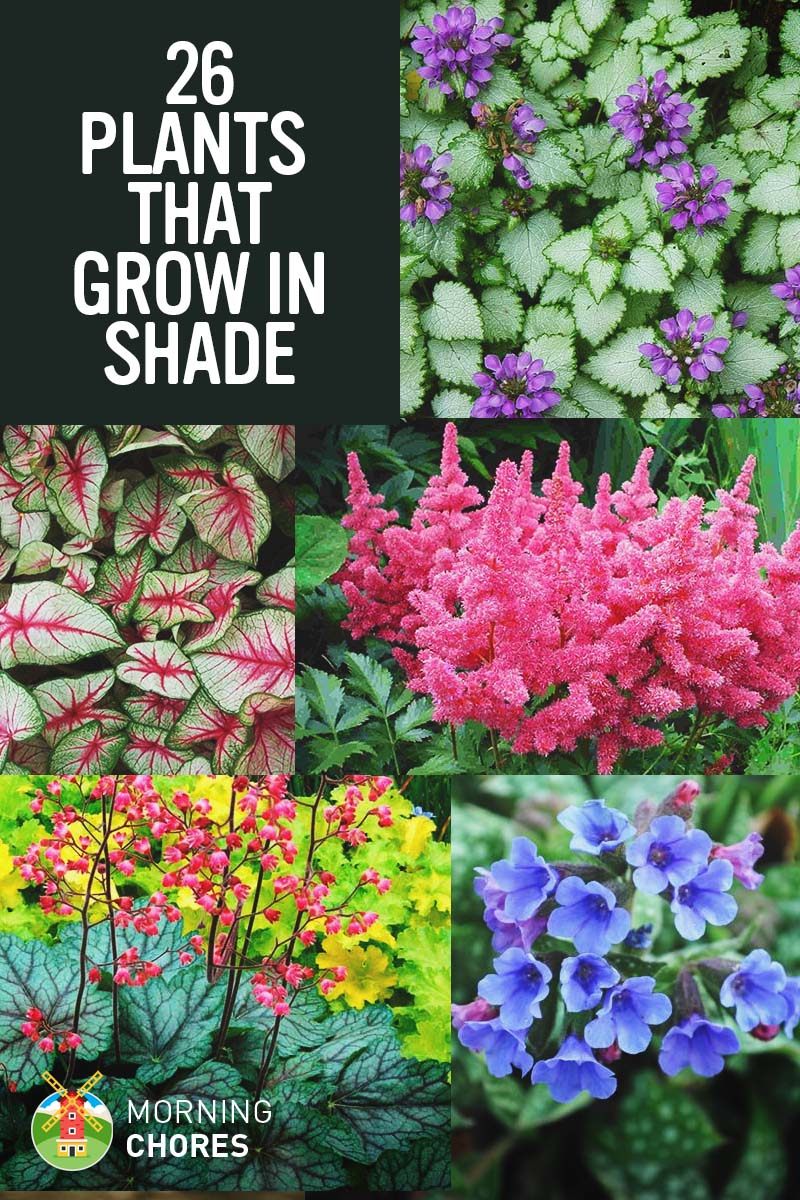 25 Gorgeous Plants That Grow in Shaded Area in Your Garden 25 Gorgeous Shade Tolerant Plants That Will Bring Your Shaded Garden Areas  to Life