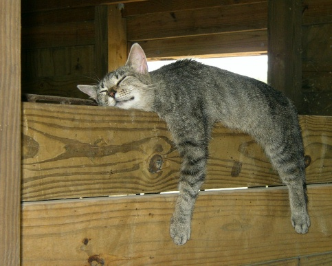 7 Massive Benefits Of Keeping Barn Cats In Your Homestead