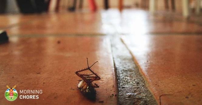Raid Ant Killer 17 Pine Forest Scent 5 Ounces