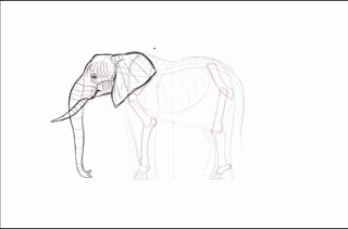 Rough sketch of an elephant's head and bone structure