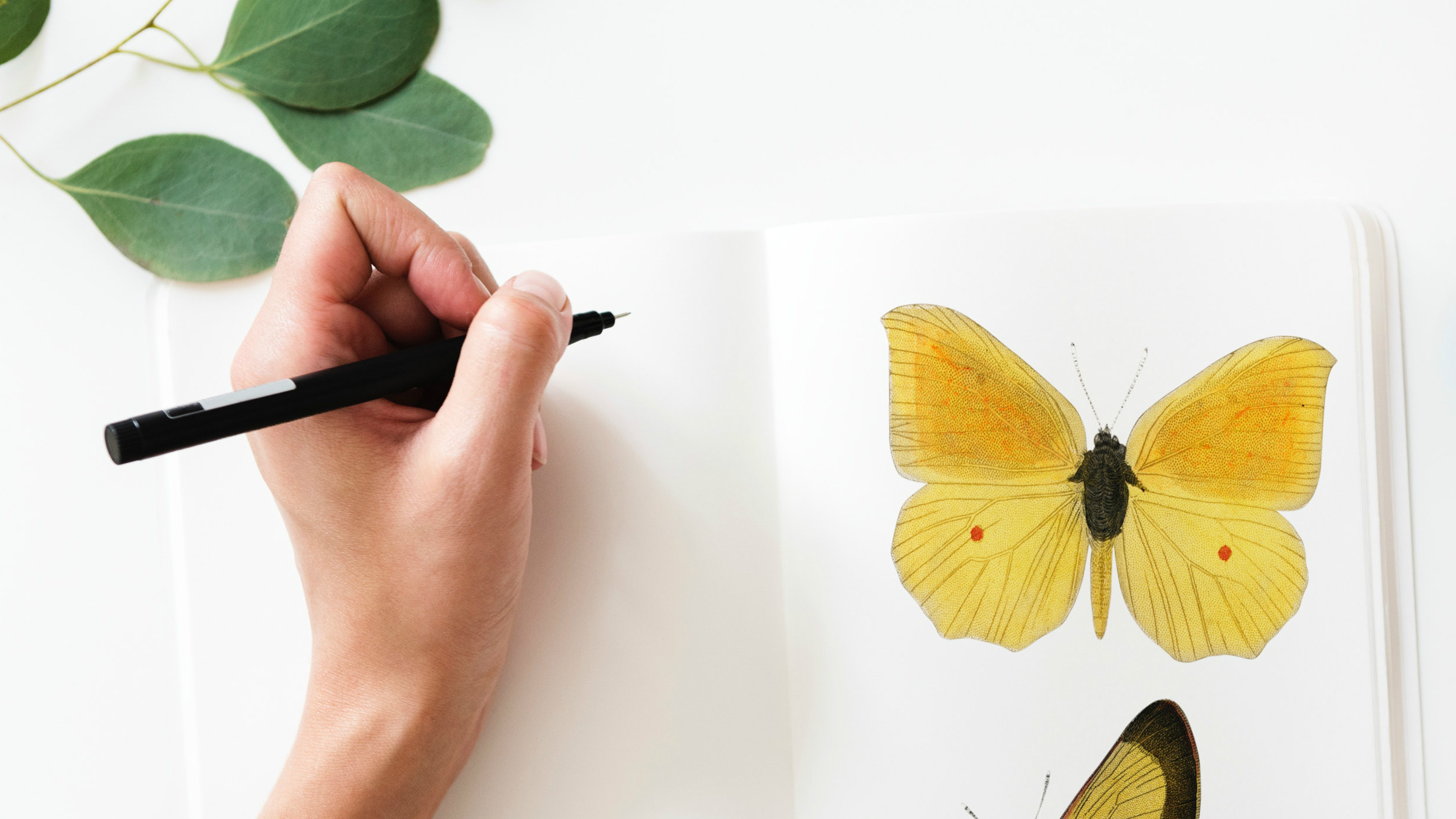 The Best Pens For Artists In 2019 Creative Bloq