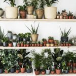 How To Look After Your Plants From Indoor To Outdoor Woman Home