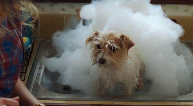 Marvel artist shares first concept art for WandaVision dog Sparky | GamesRadar+