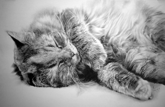 Realistic pencil drawings - Paul Lung