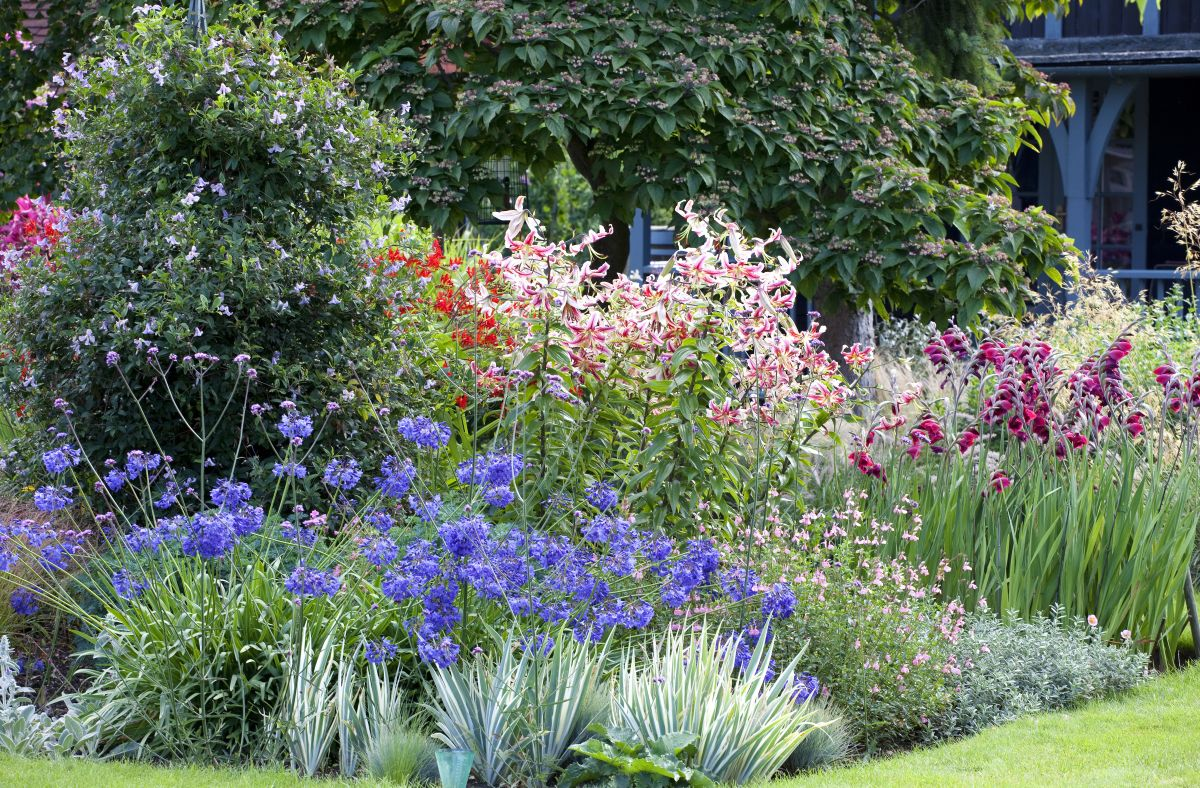 How To Choose Plants For Your Garden