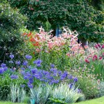 How To Choose Plants For Your Garden Real Homes