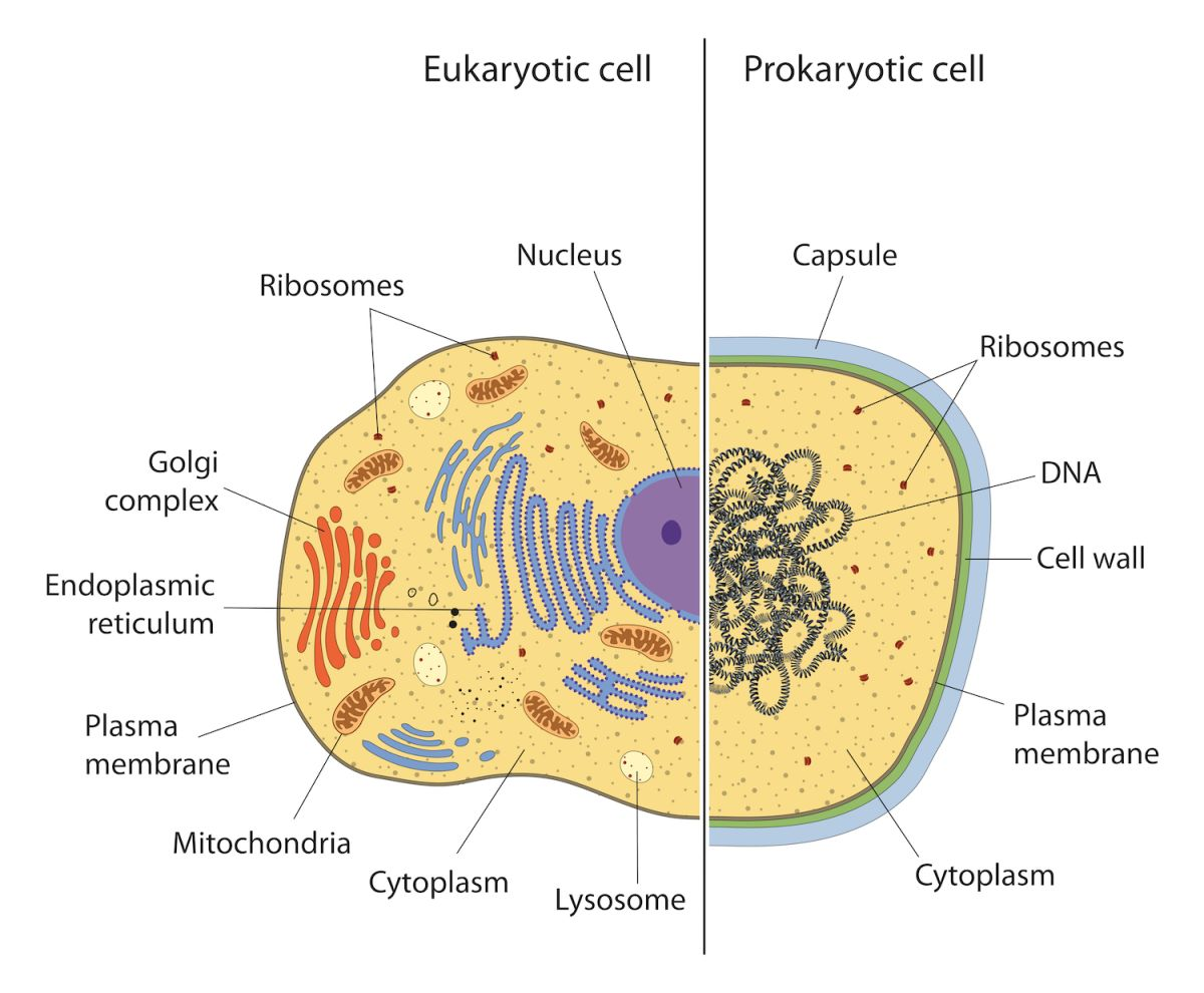 Facts About Prokaryotic