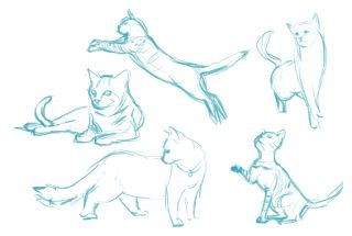 Sketches of cats