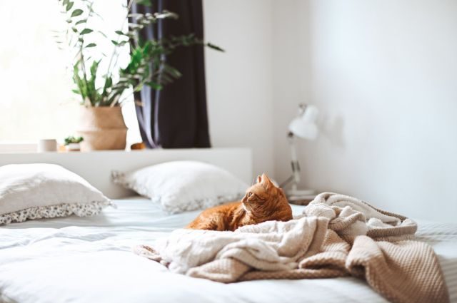 How to clean a mattress – sanitize yours with baking soda and more