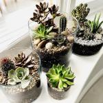 10 Terrarium Ideas For A Beautiful Plant Display Real Homes