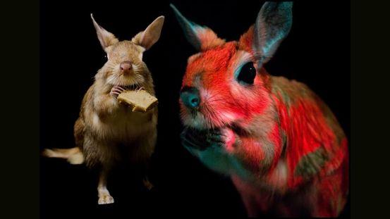 Strange rodents glow under UV light with disco swirls of pink and orange