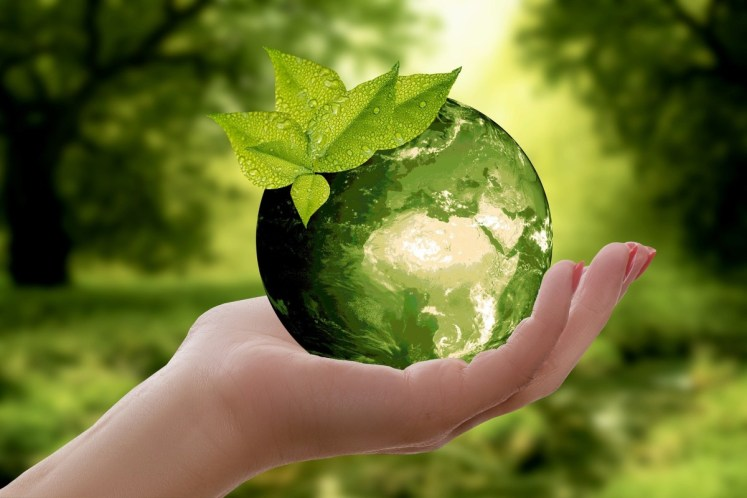 بحث عن البيئة