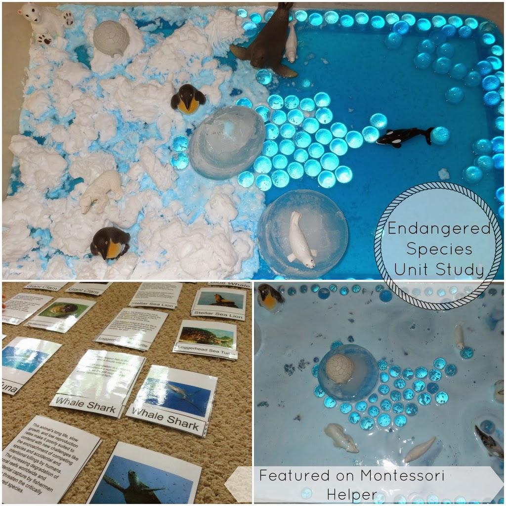 Endangered Species Ocean Animals