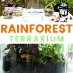 How To Make A Rainforest Terrarium With Kids Natural Beach Living