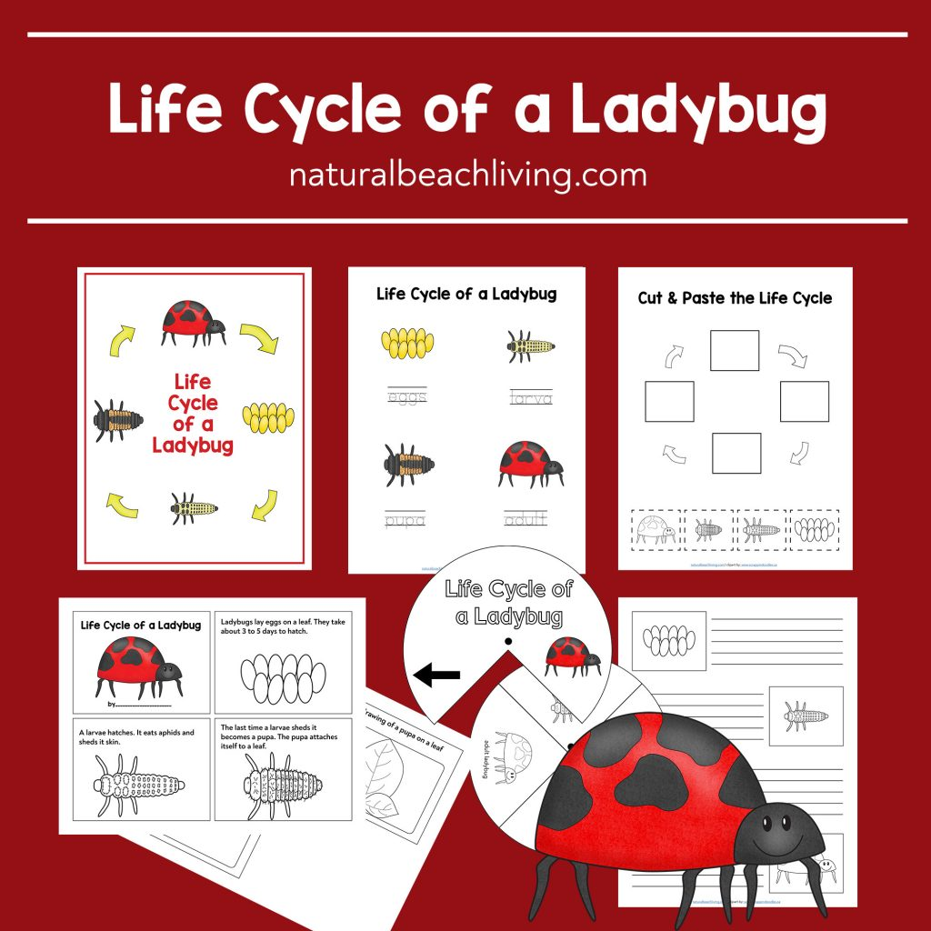 Ladybug Life Cycle Lesson Plans And Activities