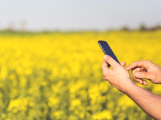 man_field_smartphone_yellow_pexels.jpg