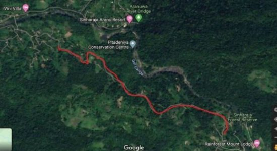 Concerns raised over unauthorized construction of road in Sinharaja