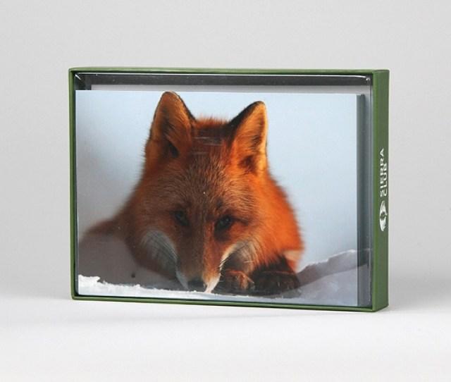 Sierra Club Red Fox Resting On Snow Holiday Cards