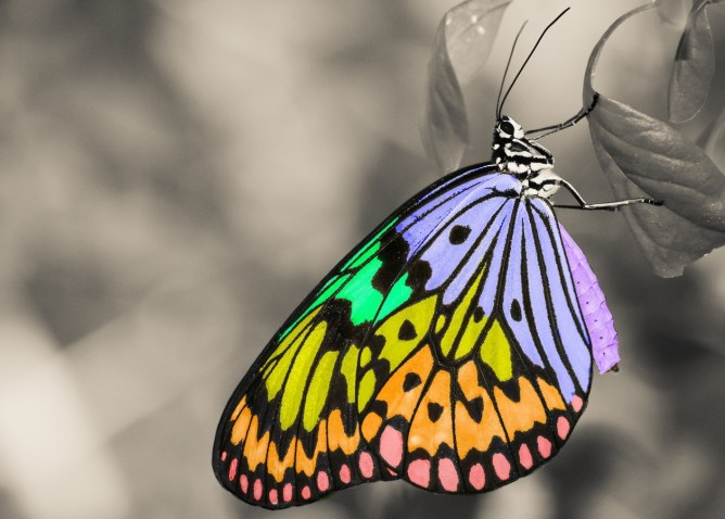 a rainbow butterfly on a black and white leaf