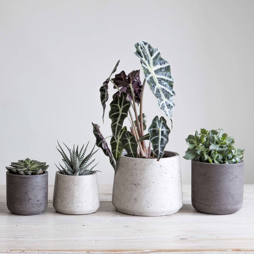 Cement Plant Pot By Idyll Home Notonthehighstreet Com