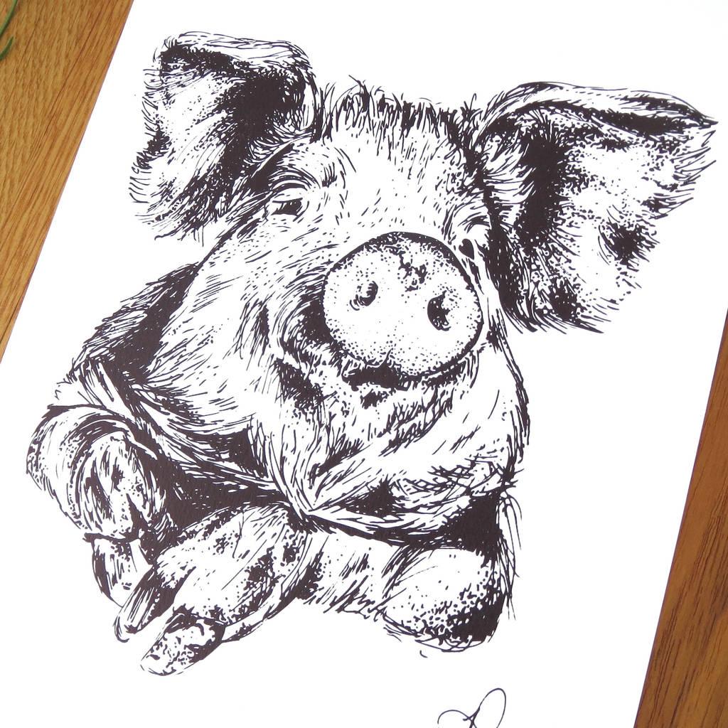 Pig Pen And Ink Illustration Framed Print By Jeeves Amp Co