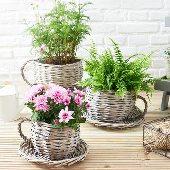 Willow Teacup Planter 100 Cheap Thoughtful Gift Ideas For Her Under £20