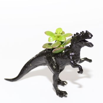 black dinosaur with money plant Unique And Quirky Gift Ideas Any Odd Person Will Appreciate (Fun Gifts!)