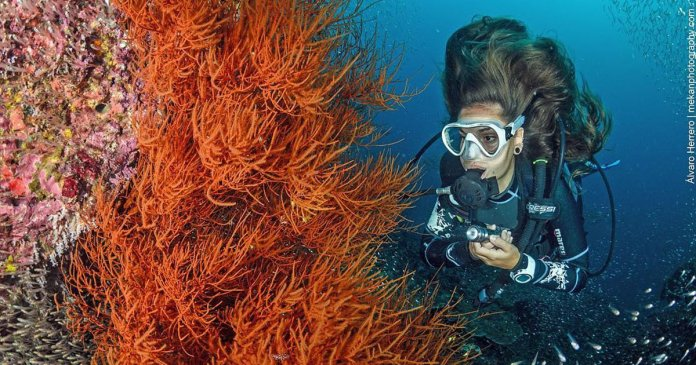 Indonesia The Best Scuba Diving In The World
