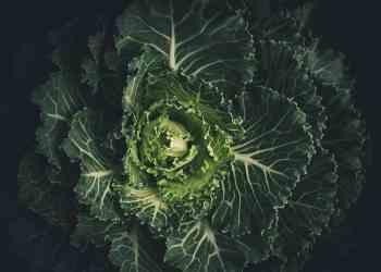 5 Recipes Guaranteed To Make You a Kale Lover