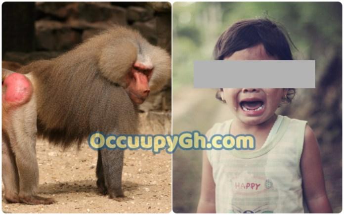 girl mauled buttocks baboon