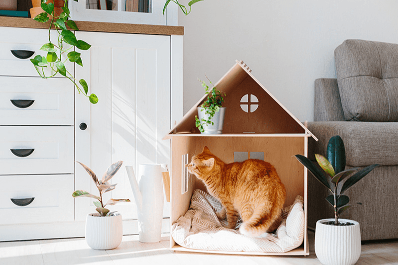maison pour chat a faire soi meme