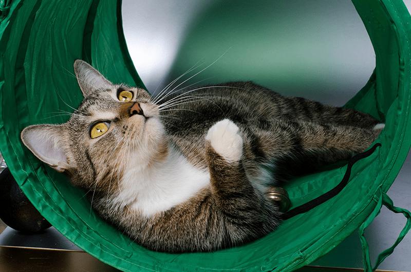 le tunnel pour chat jeu irresistible