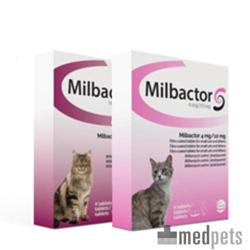 beste ontwormingsmiddel kat