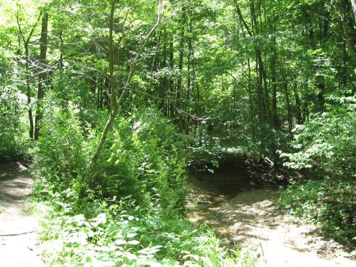 2) Knobstone Trail of Fun