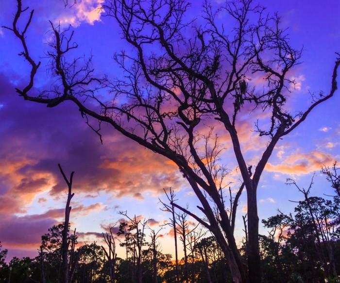 9. Highlands Hammock State Park