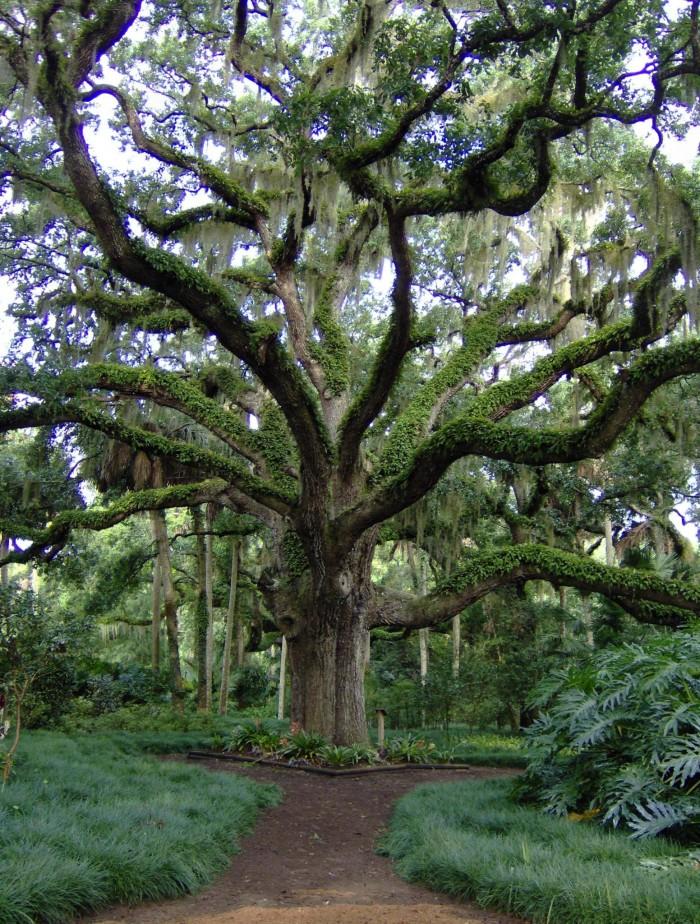 11. Washington Oaks Gardens State Park