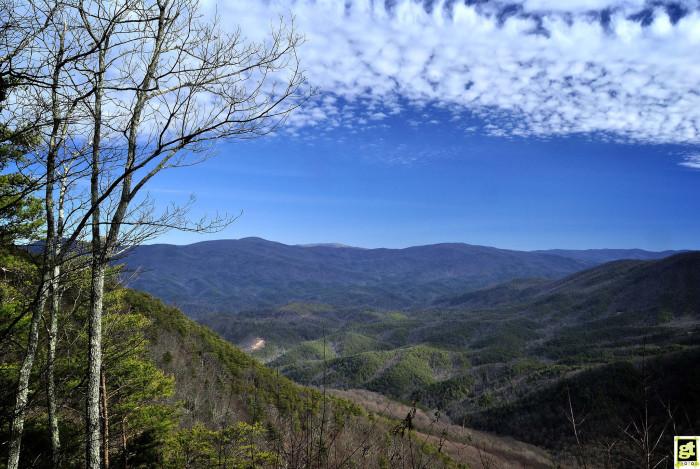 Blue Mountains Wildlife