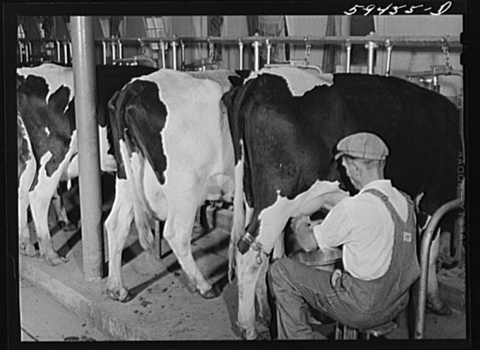 12 Vintage Photos Of Nebraska Farms From The Past