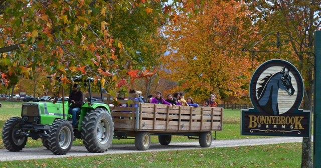 New Springfield Ohio Corn Maze