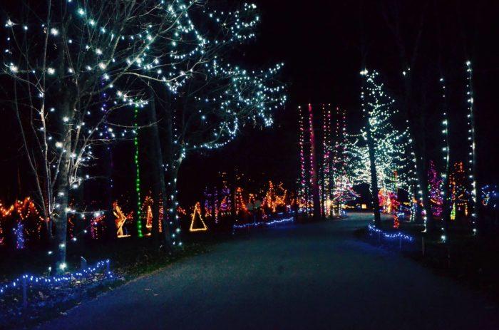Cincinnati Zoo Christmas Lights