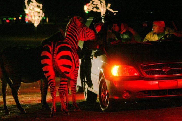 Holiday Zoo Lights