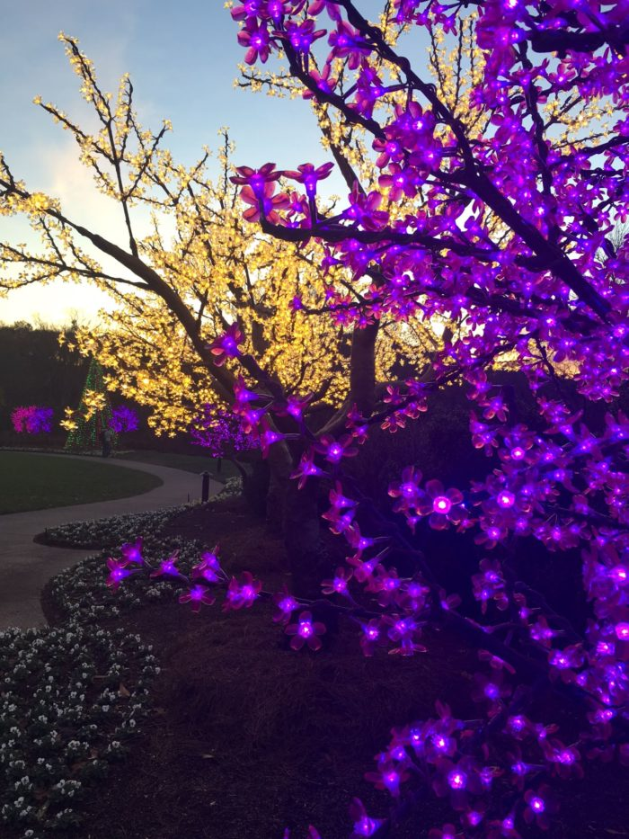 Cheekwood Botanical Gardens Has The Best Holiday Light