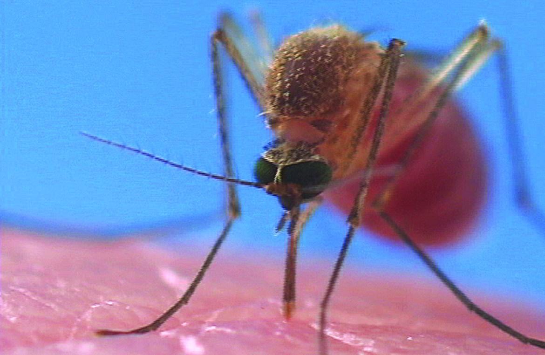Mosquito Bites - Symptoms, Reactions, Allergies
