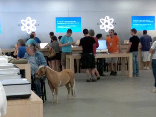 лошадь в яблочном магазине