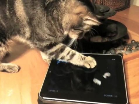 Кошка играет в игры для iPad