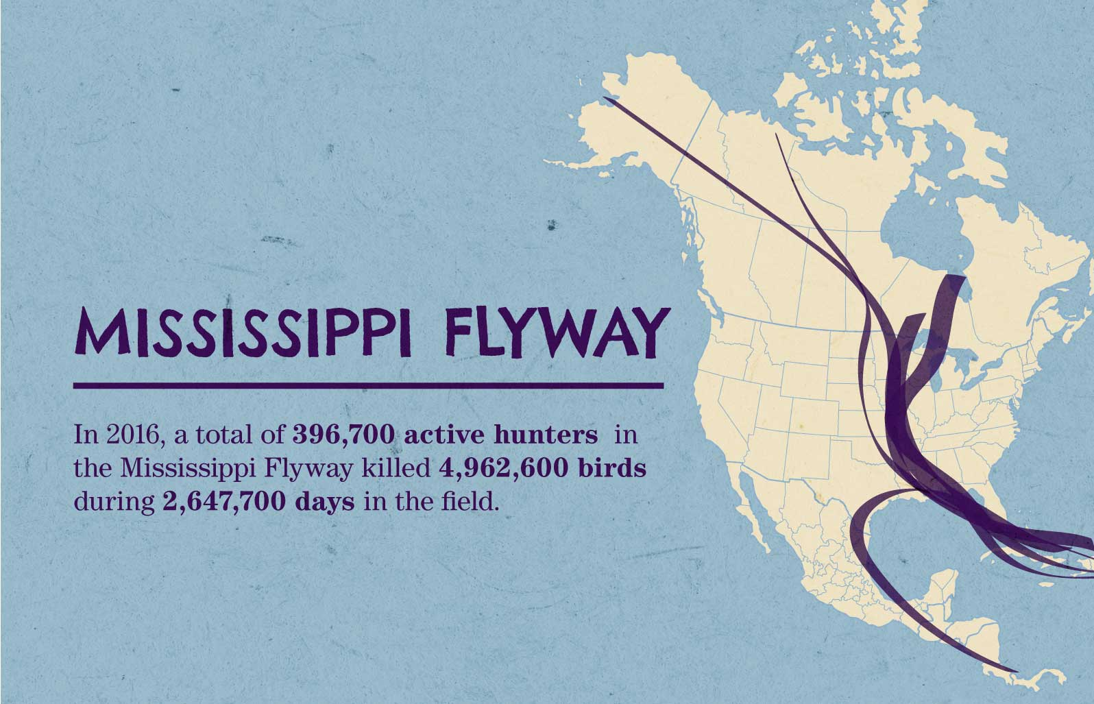 Infographic What You Need To Know About Migrating Ducks