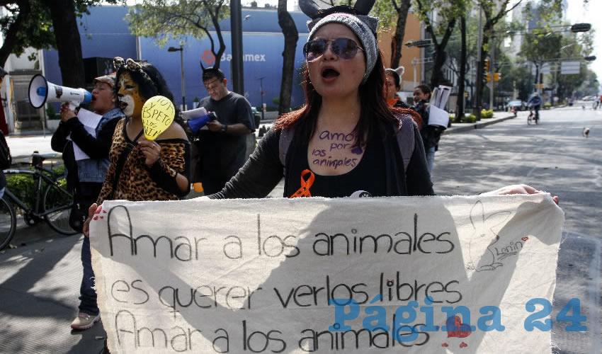 """Aunque se reconocen los derechos de los animales y se condena y castiga el maltrato animal en Jalisco, deben de cambiar algunos artículos para que se pueda lograr un verdadero """"bienestar"""" animal/Foto: Cuartoscuro"""