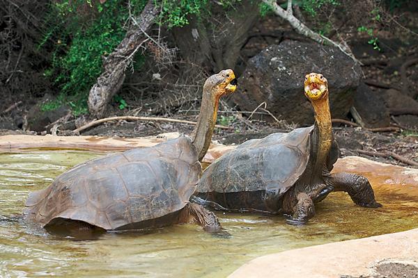 Tortoise_Galapagos_Ecuador.jpg
